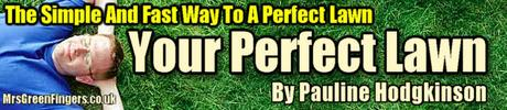 Product picture Your Perfect Lawn